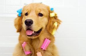 2 sesiones de peluquería canina completa con baño, corte de pelo y más