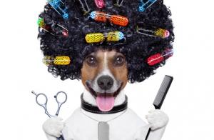 Peluquería canina completa con baño, corte de pelo y más