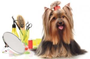 Curso on-line de iniciación a la peluquería canina
