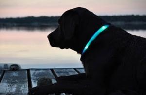 Collar para perro con Luz Led